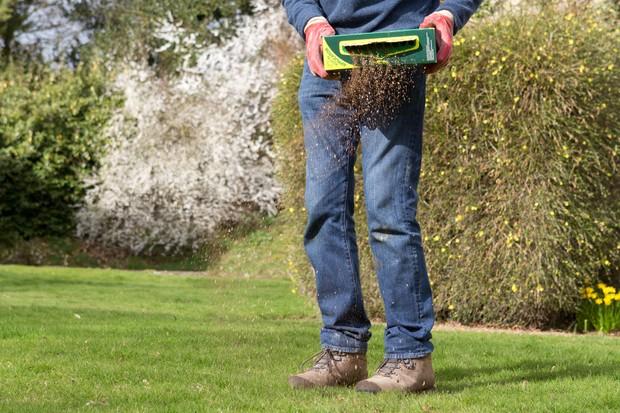 Applying lawn feed