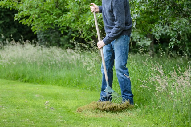Scarifying the lawn with a spring-tine rake