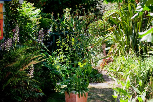 Summer container with nicotianas