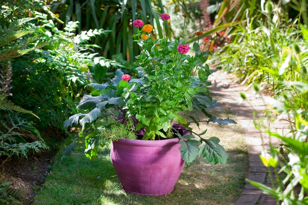 Container planted with zinnias and decorative veg