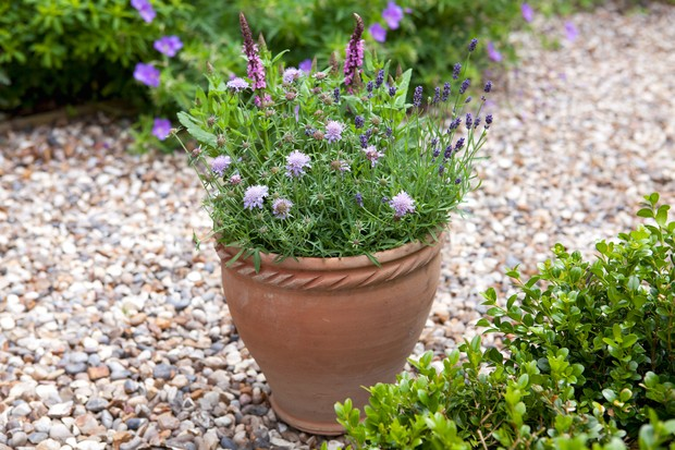 Bee-friendly container with scabious