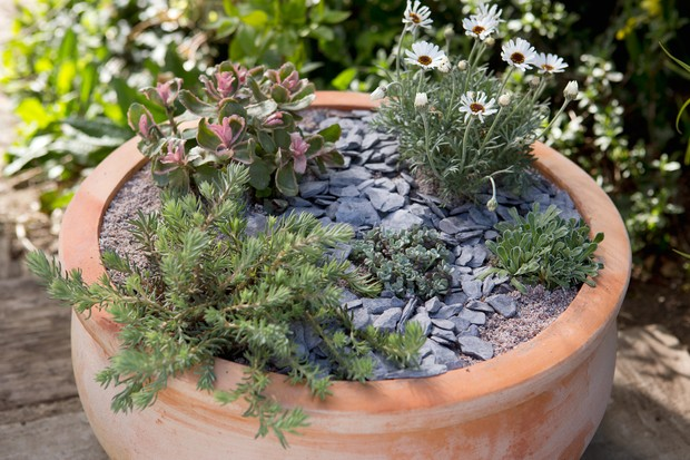 Terracotta pot with sun-loving succulents