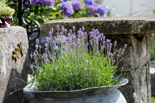 Lavender in a metal container