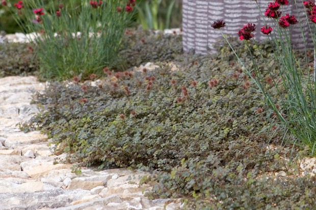 Top Plants for Green Roofs (Soil Depth 50mm) - BBC Gardeners
