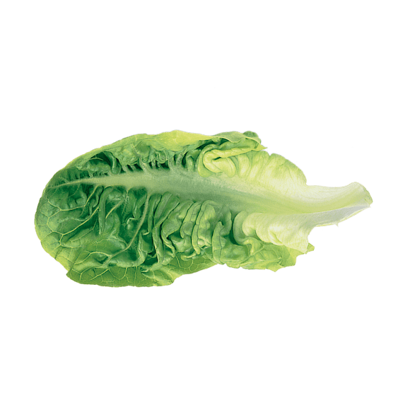 lettuce leaf square
