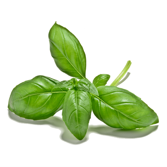 CUT-OUT-1024X1024-basil-leaves-LI3067842