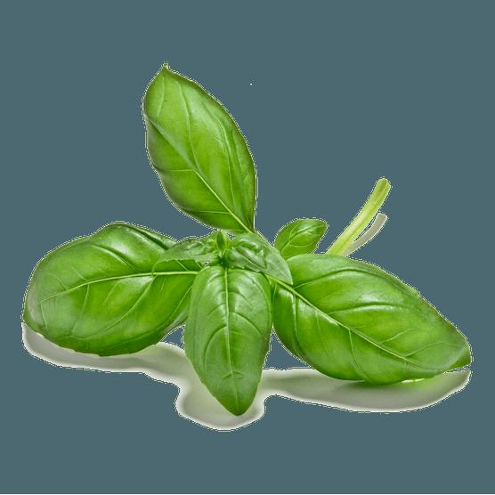 CUT-OUT-1024X1024-basil-leaves-LI3067842