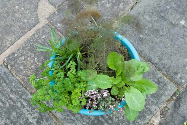 Herb pot for fish dishes