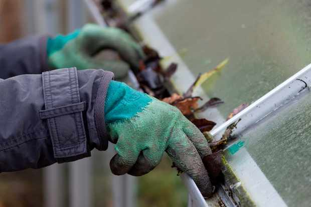 Siting A Greenhouse Gardenersworld Com