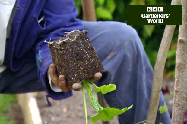 How to grow courgettes and climbing beans together video