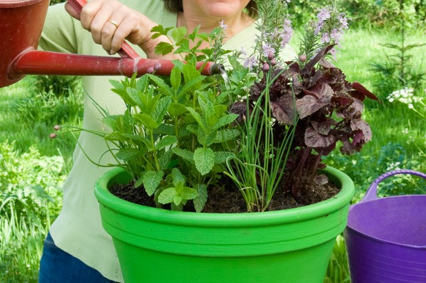 Herb pot for vegetable dishes - watering the display