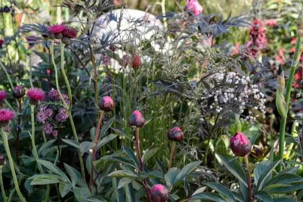 peony-sambucus-and-deschampsia-3