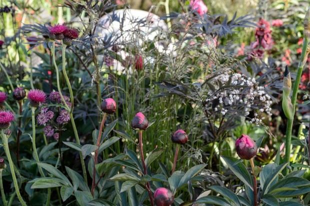 Magenta peonies and thistles with black elder and grasses