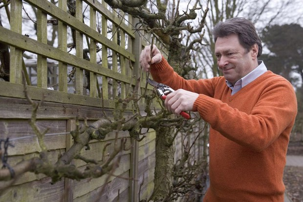 Alan Titchmarsh pruning a trained fruit tree into shape