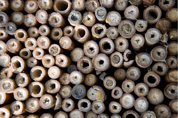 hollow-bamboo-stems-used-en-masse-to-create-a-bee-hotel