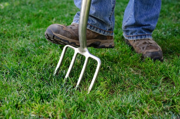 Boosting lawn aeration and drainage by spiking with a garden fork