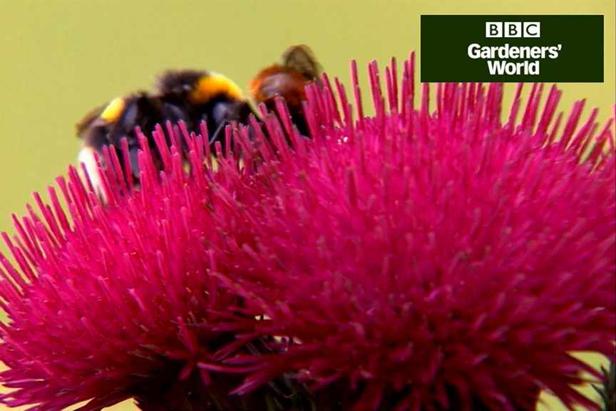 How to create a wildlife garden (part six) video