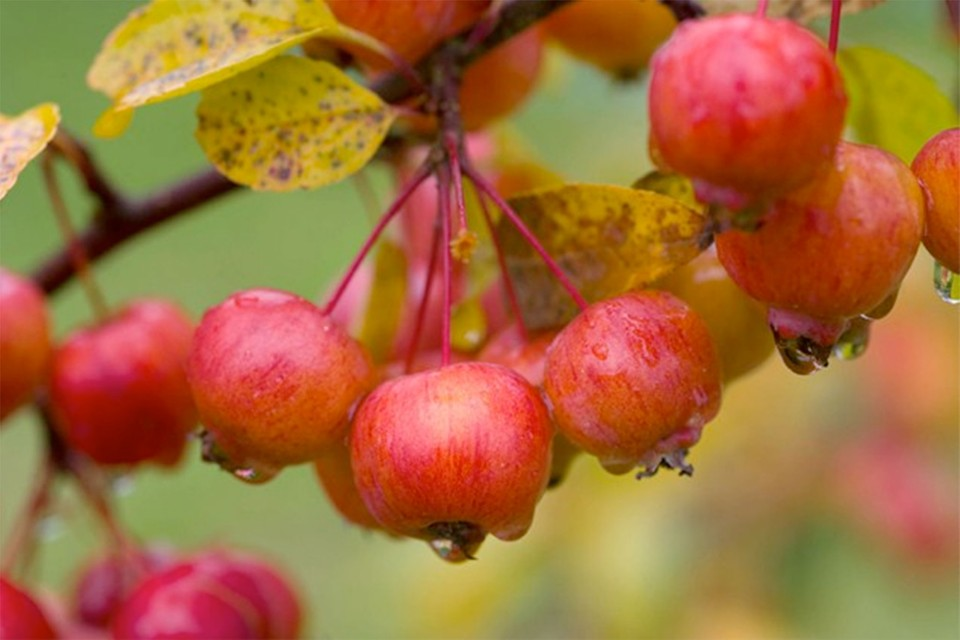 10 Plants For Autumn Colour Bbc Gardeners World Magazine