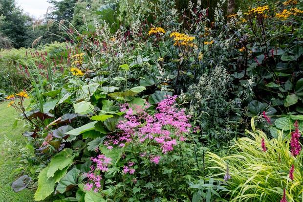 bog-garden-5