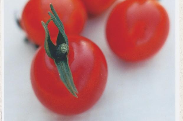 Ripe 'Tumbling Tom' cherry tomatoes