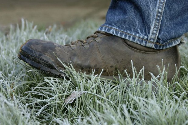 Protecting plants in winter - walking on grass