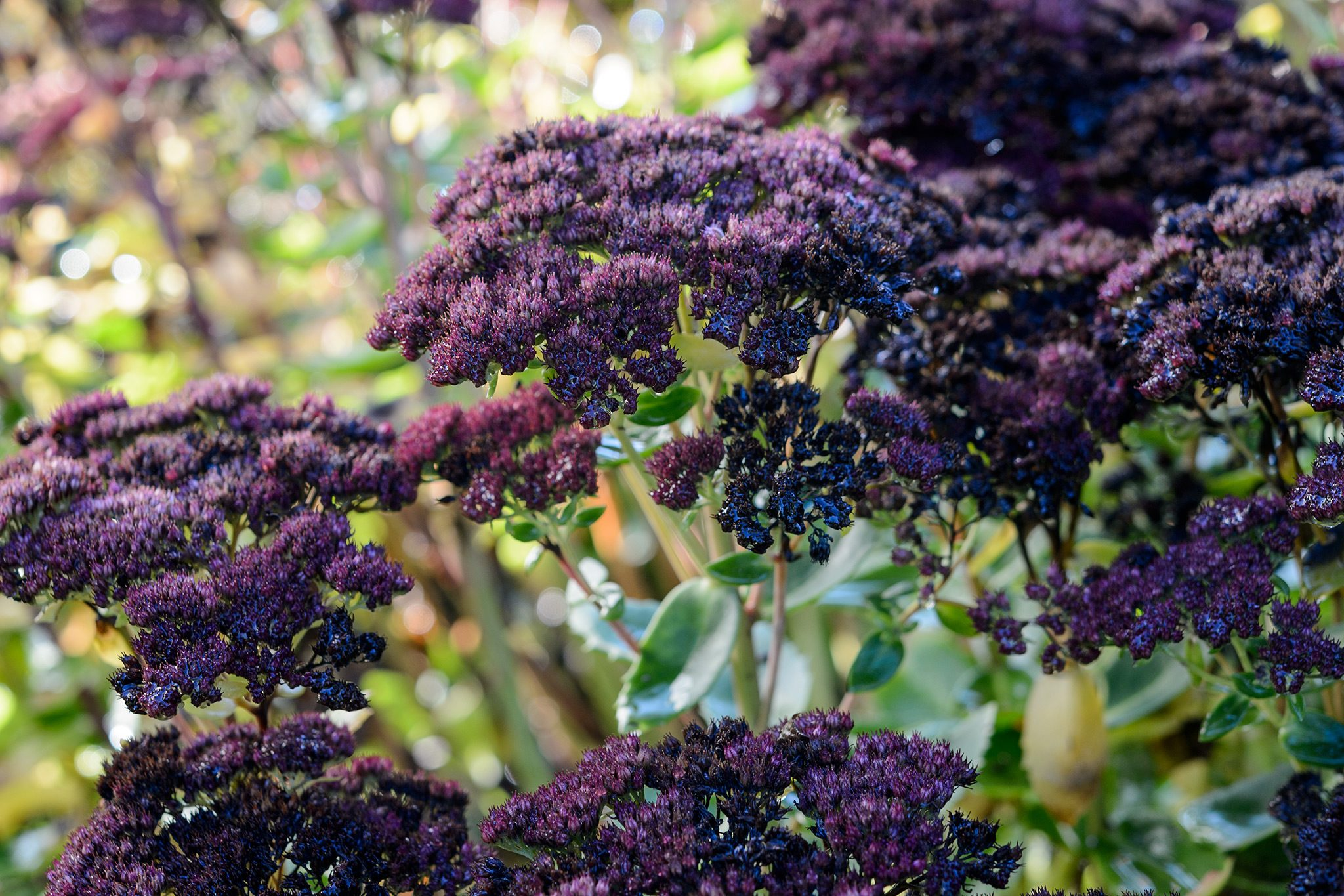 Gardeners World & Best Plants for Winter Containers - BBC Gardeners\u0027 World ...
