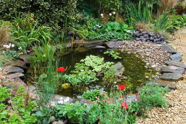 Three ways to improve your pond