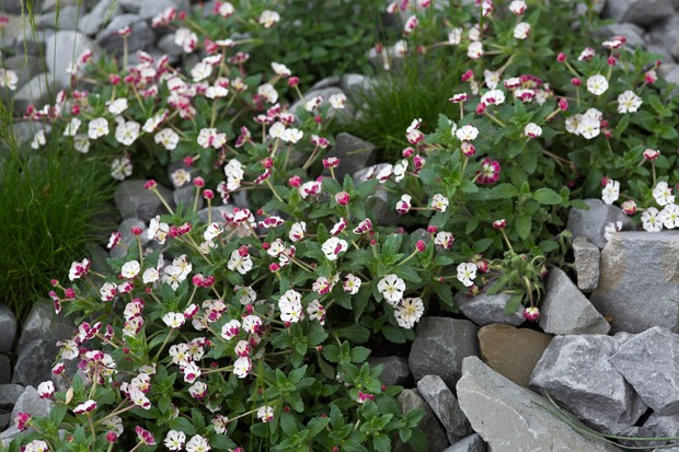 12 Plants for Evening Scent - BBC Gardeners' World Magazine
