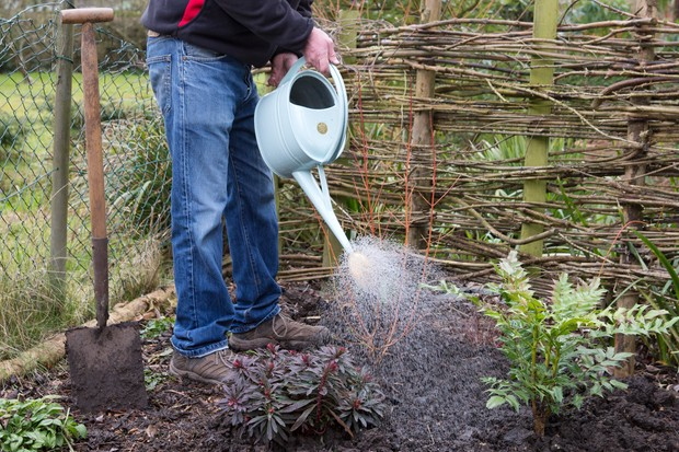 watering-in-a-perennial-plant-3