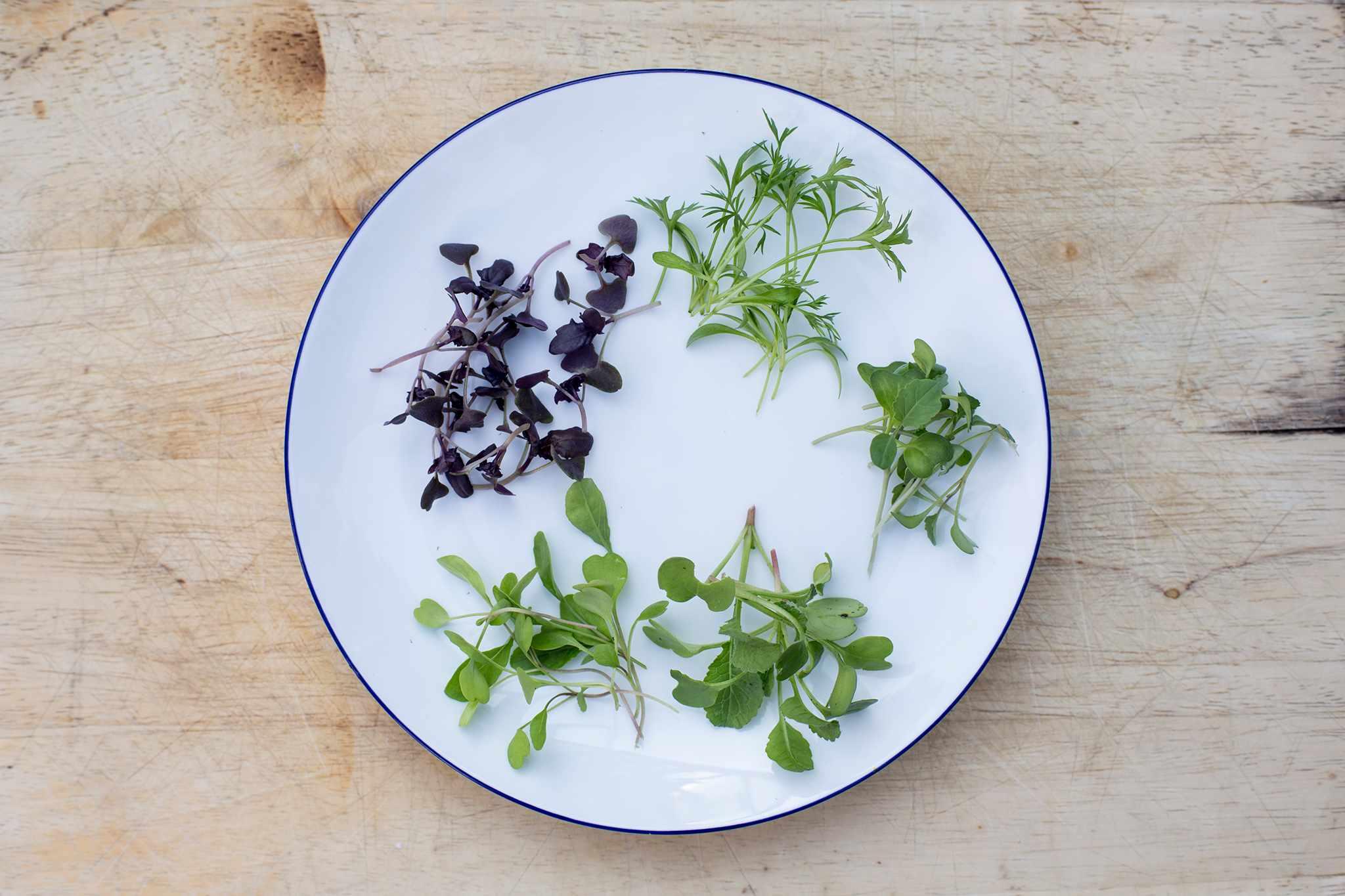 A selection of microgreens