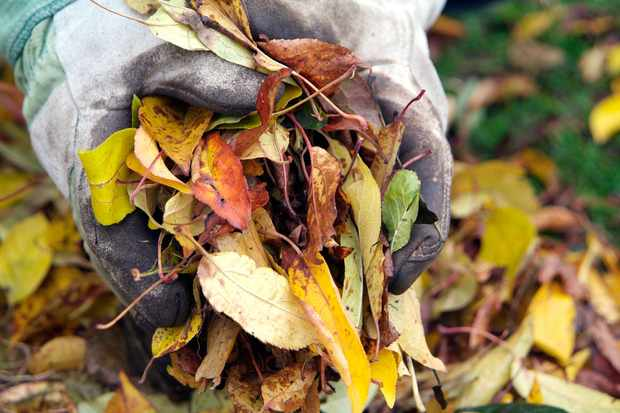 How to collect autumn leaves