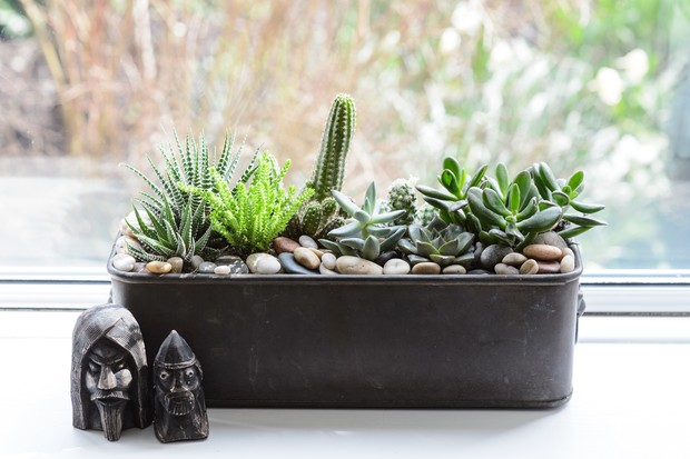 plants-for-a-hot-windowsill-3