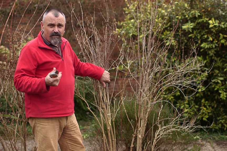 The basics of shrub pruning NFG video