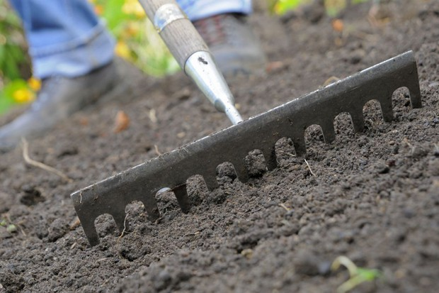 Raking the soil to remove weeds and stones