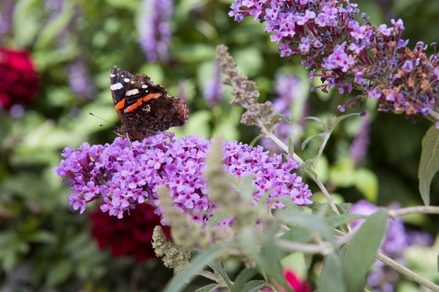 10 Plants For Butterflies Gardenersworld Com