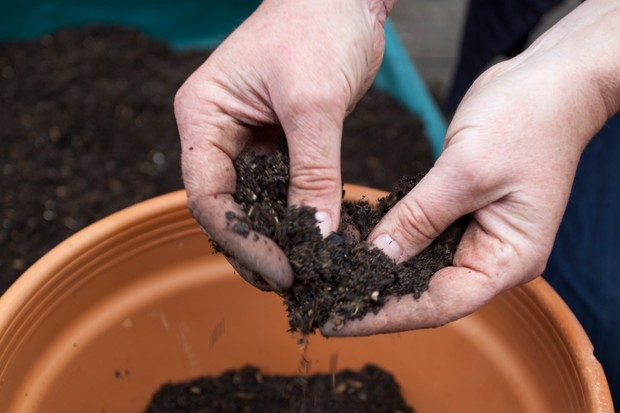 Trickling peaty soil between fingertips