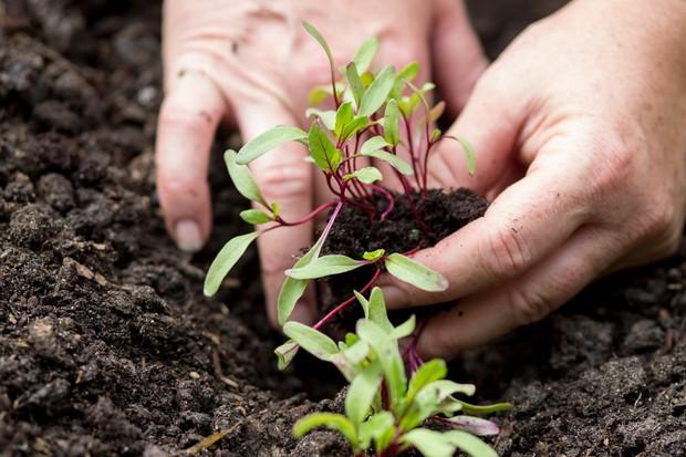 planting-plug-plants