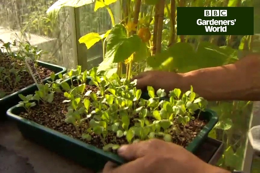 How to grow spring spinach and cabbage video