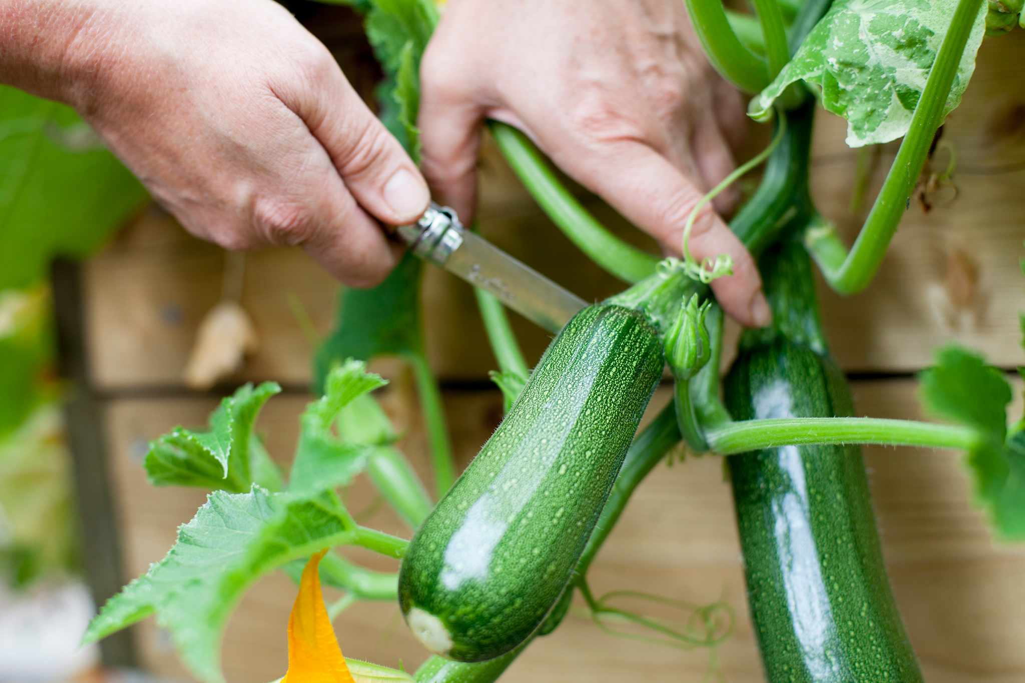 How to make the most from your small veg plot