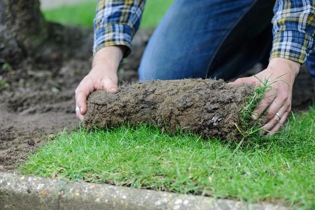 Laying wildflower turf