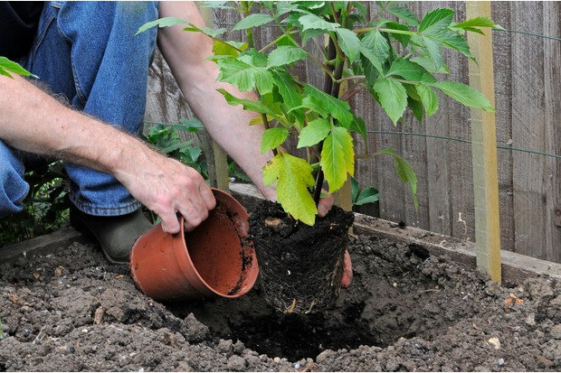 remove-the-plant-from-its-pot-3