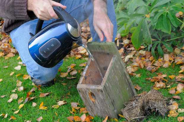cleaning-out-a-nest-bird-box-3