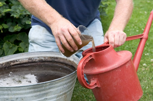 88261-Diluting home-made liquid nettle feed in a watering can for application
