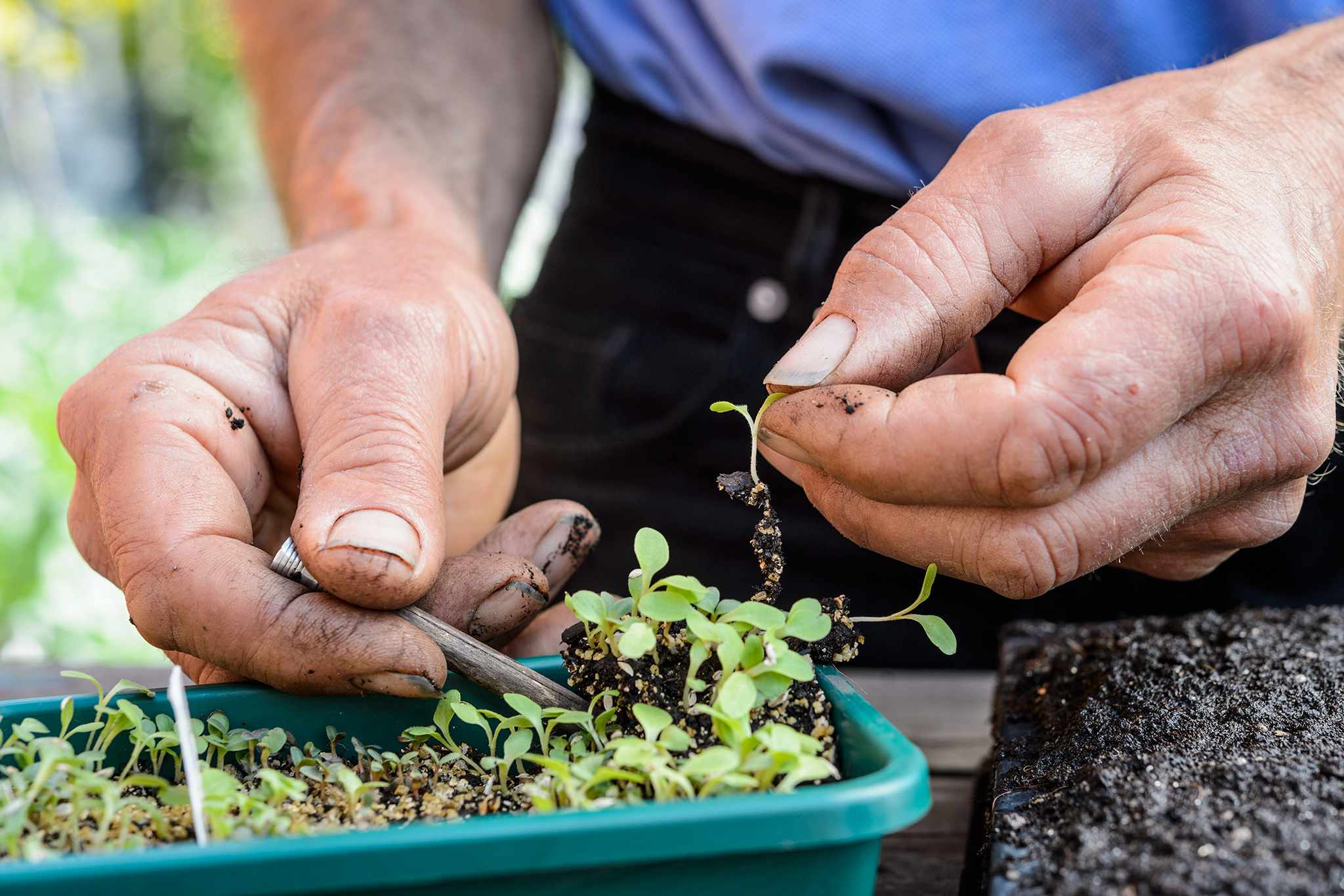 Nine Tips for Seed Sowing Success