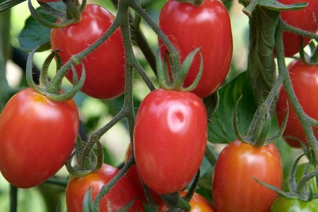 plum-tomato-2