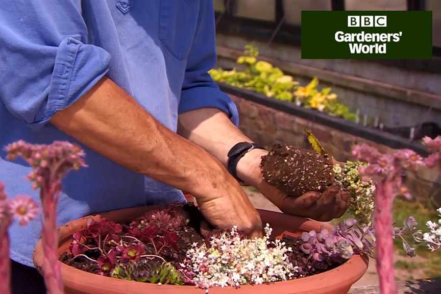 How to grow succulent alpines in a pot