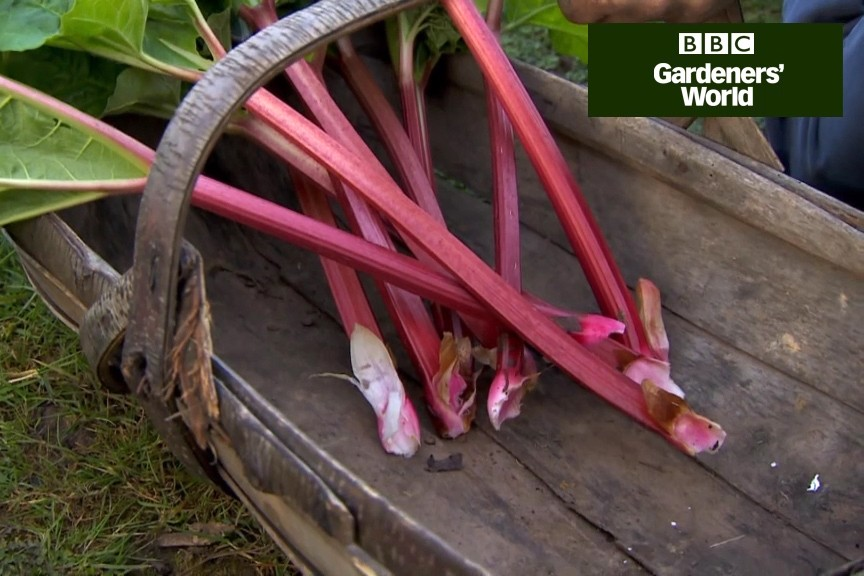 How to harvest rhubarb video