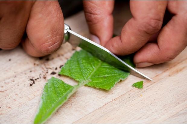 Cutting the streptocarpus leaf with a knife