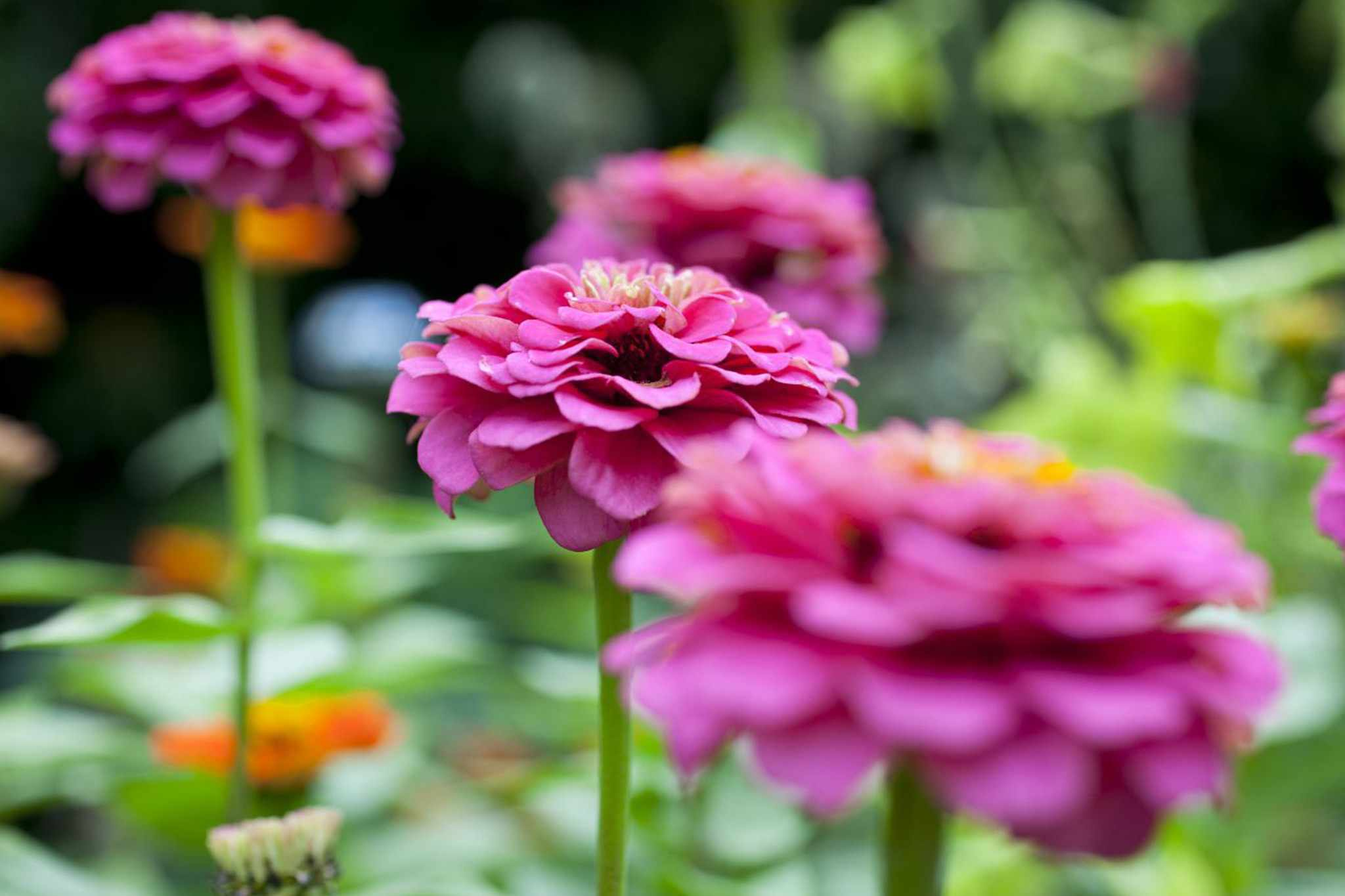 Grow summer bedding from seed