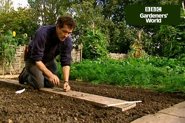 How to plant broad beans